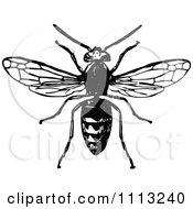 Vintage Black And White Hornet