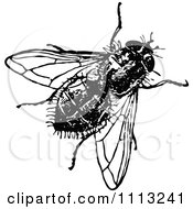 Clipart Vintage Black And White House Fly Royalty Free Vector Illustration