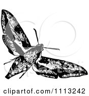 Clipart Vintage Black And White Flying Moth Royalty Free Vector Illustration