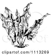 Clipart Vintage Black And White Aquatic Aquarium Plant 2 Royalty Free Vector Illustration