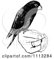 Clipart Vintage Black And White Parrot Perched On A Hand Royalty Free Vector Illustration by Prawny Vintage