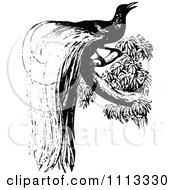 Clipart Vintage Black And White Bird Of Paradise Royalty Free Vector Illustration by Prawny Vintage