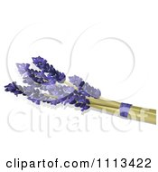Lavender Stalks And Flowers On White With Copyspace