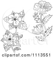Clipart Black And White Buttercup And Dogwood Flowers Royalty Free Vector Illustration