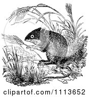 Clipart Vintage Black And White Field Mouse 1 Royalty Free Vector Illustration by Prawny Vintage