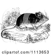 Clipart Vintage Black And White Field Mouse 2 Royalty Free Vector Illustration by Prawny Vintage
