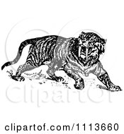 Clipart Vintage Black And White Sabre Tooth Tiger Royalty Free Vector Illustration