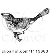 Clipart Vintage Black And White Sparrow Royalty Free Vector Illustration