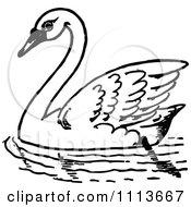 Vintage Black And White Swimming Swan