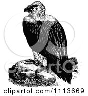 Vintage Black And White Vulture