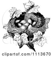 Clipart Vintage Black And White Bird Nest With Eggs And Ivy Royalty Free Vector Illustration