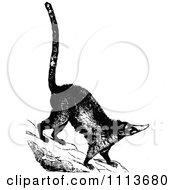 Clipart Vintage Black And White Coatimundi Royalty Free Vector Illustration
