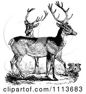Clipart Vintage Black And White Male Deer Royalty Free Vector Illustration by Prawny Vintage