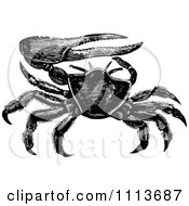 Clipart Vintage Black And White Fiddler Crab Royalty Free Vector Illustration