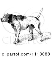 Clipart Vintage Black And White Aggressive Guard Dog Royalty Free Vector Illustration by Prawny Vintage