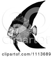 Clipart Vintage Black And White Tropical Marine Fish 1 Royalty Free Vector Illustration by Prawny Vintage