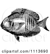 Clipart Vintage Black And White Tropical Marine Fish 2 Royalty Free Vector Illustration by Prawny Vintage