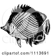 Clipart Vintage Black And White Tropical Marine Fish 3 Royalty Free Vector Illustration by Prawny Vintage