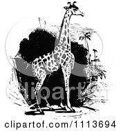 Clipart Vintage Black And White Giraffe Royalty Free Vector Illustration by Prawny Vintage