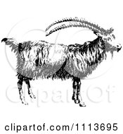 Clipart Vintage Black And White Goat In Profile Royalty Free Vector Illustration by Prawny Vintage