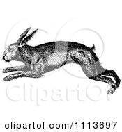 Clipart Vintage Black And White Rabbit Hopping Royalty Free Vector Illustration