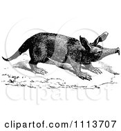 Clipart Vintage Black And White Aardvark Royalty Free Vector Illustration by Prawny Vintage