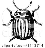 Clipart Vintage Black And White Potato Beetle Royalty Free Vector Illustration by Prawny Vintage