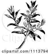 Clipart Vintage Black And White Flowering Olive Branch Royalty Free Vector Illustration