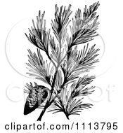 Clipart Vintage Black And White Pine Branch With A Cone Royalty Free Vector Illustration