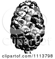 Clipart Vintage Black And White Stone Pine Cone Royalty Free Vector Illustration by Prawny Vintage