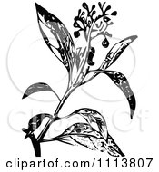 Clipart Retro Black And White Camphire Henna Plant With Flowers Royalty Free Vector Illustration by Prawny Vintage