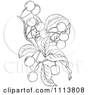 Clipart Retro Black And White Cherry Tree Branch Royalty Free Vector Illustration by Prawny Vintage