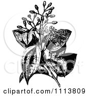 Clipart Retro Black And White Cinnamon Plant And Flowers Royalty Free Vector Illustration