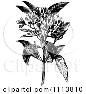 Clipart Retro Black And White Clove Plant And Flowers Royalty Free Vector Illustration