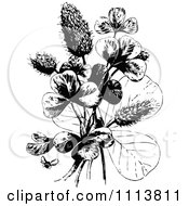 Clipart Retro Black And White Bee And Clover Plant Royalty Free Vector Illustration by Prawny Vintage
