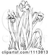 Clipart Retro Black And White Flowering Daffodil Plant Royalty Free Vector Illustration