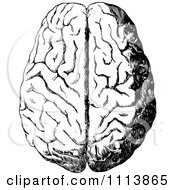 Clipart Vintage Black And White Human Brain 1 Royalty Free Vector Illustration
