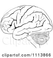 Vintage Black And White Human Brain 2
