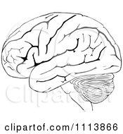 Vintage Black And White Human Brain 2