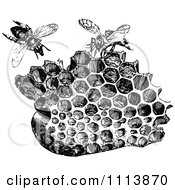 Clipart Vintage Black And White Honeycombs And Bees Royalty Free Vector Illustration by Prawny Vintage