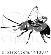 Clipart Vintage Black And White Hornet Royalty Free Vector Illustration by Prawny Vintage