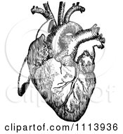 Vintage Black And White Human Heart