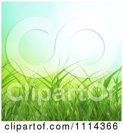 Background Of Green Spring Grass