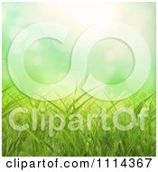 Background Of Green Grass With Flares Of Light
