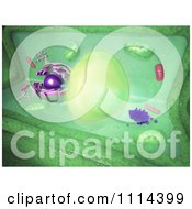 Clipart 3d Plant Cell Royalty Free CGI Illustration