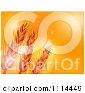 Clipart Wheat Over An Orange Sunset With Flares Of Light Royalty Free Vector Illustration