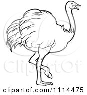 Outlined Walking Ostrich