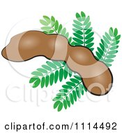 Clipart Tamarind Fruit And Leaves Royalty Free Vector Illustration by Lal Perera