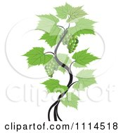 Clipart Green Grape Vine Royalty Free Vector Illustration