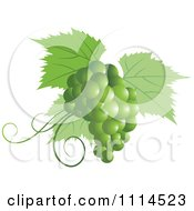 Clipart Green Grapes And Leaves Royalty Free Vector Illustration